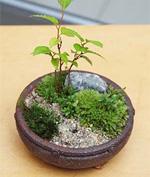 苔盆栽コース